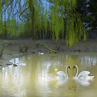Swans on the lake  by Ann Persse