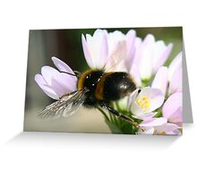 Flying bee Greeting Card