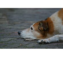 Doggy Thoughts Photographic Print