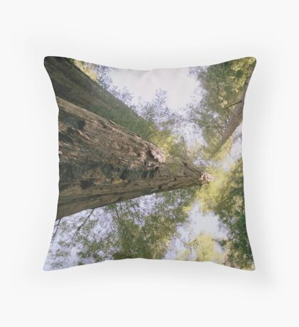 Redwood forests Throw Pillow