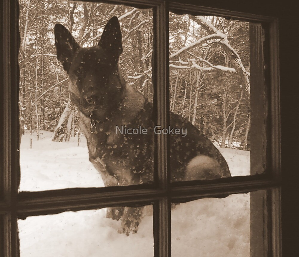 Through The Looking Glass by Nicole  Gokey