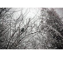 Snow Photographic Print