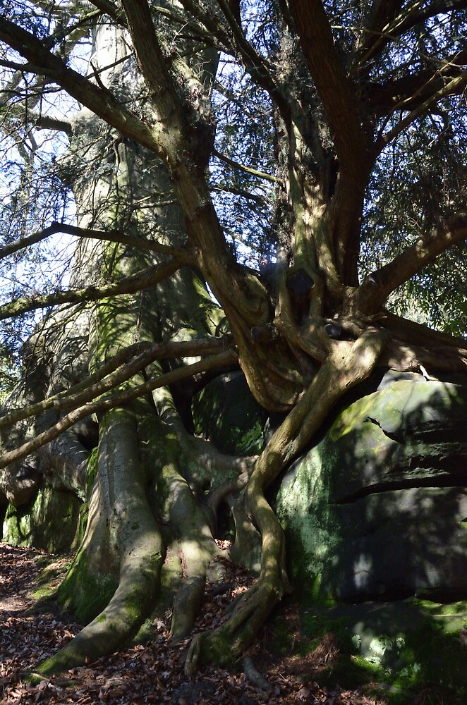 rock, tree and root by Stephen Frost