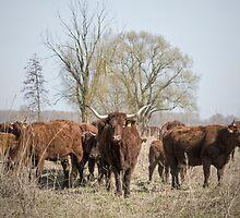 Bovine Animals by Henri Ton