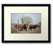 Bovine Animals Framed Print