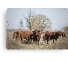 Bovine Animals Canvas Print