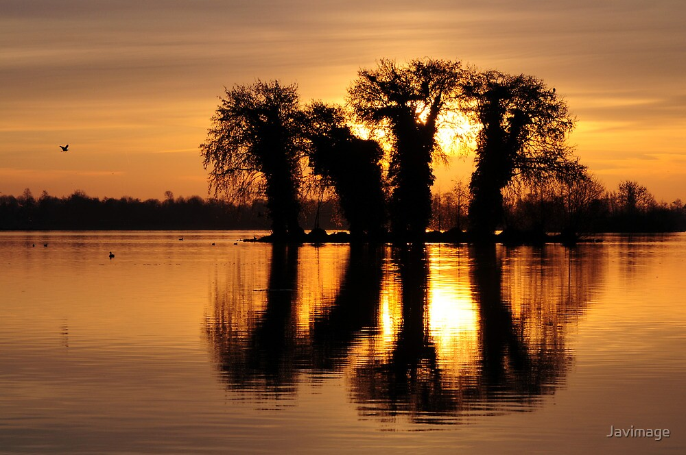 Island of herons waking up by Javimage