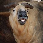 San Diego Zoo - Funny Faced Animal by Phil Roberson