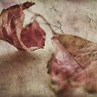 ~ Autumn #3 ~ by Lynda Heins