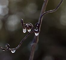 Ice on the Vine by Mike Oxley
