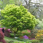 Dartington Garden in the Spring by Janice Petitjean