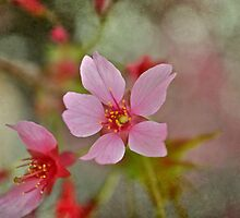 Bring On The Pink by A Different Eye Photography