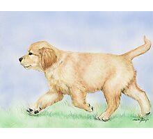 Golden Puppy Photographic Print