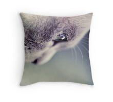 Cute Pet Cat - Macro Throw Pillow
