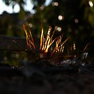 Twinkly summer moss by contradirony