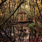 Autumn Garden, Stonyford Cottage, Cheshire by Simon Duckworth