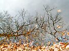Autumn Reflections in Alloway Lake, NJ by MotherNature