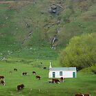 Green Peace - Wanaka New Zealand by jeffbphotos