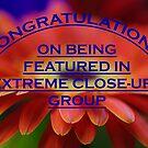 Banner Challenge Entry by Liz Worth