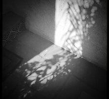 Planted Shadows by Athenawp