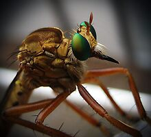 Robber Fly by venny