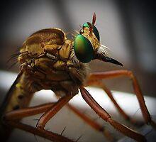 Robber Fly by Savannah Gibbs