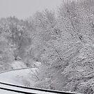 Snow Tracks by MaryLynn