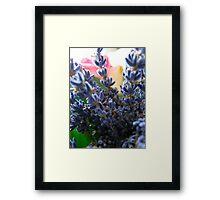 Spike Lavendin Framed Print