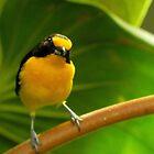 Curious Bird by Atheum