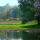 Kandawgyi National Gardens by Brian Bo Mei