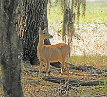 Deer in Nature by Rosalie Scanlon