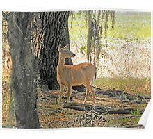 Deer in Nature Poster