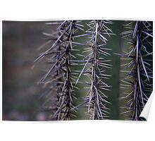 Saguaro Poster