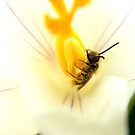 First Taste of Pollen by Sharon Woerner