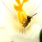 First Taste of Pollen by Sharon Woerner