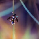 Macro Wasp - Nature by Cubagallery