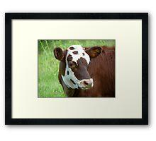 Bovine Beauty Framed Print