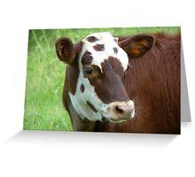 Bovine Beauty Greeting Card