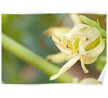macro shot of papaya buds Poster