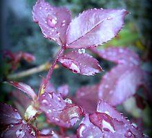Rain drops...  by becca2425