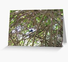 Willy Wagtail Greeting Card