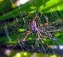 St Andrew's Cross Spider2. by Margaret Stevens