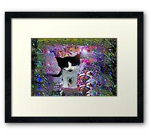 Black and white kitten in a wonder world Framed Print