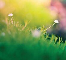 Garden Macro - Nature by Cubagallery