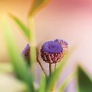 Bokeh Flowers by Cubagallery