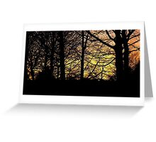 Sunset Through The Trees 2 Greeting Card