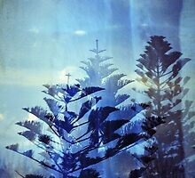 Araucaria by Melissa Drummond