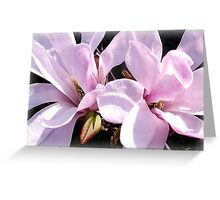 March Magnolias Greeting Card