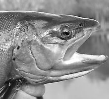 Brown trout in Black and white. by Richard Bowler