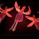 Dance of the Sugarplum Fairies by ImageorArt